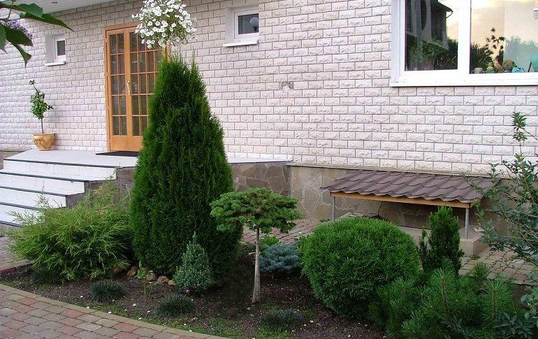 какие деревья посадить возле дома за забором