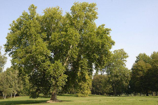 Nel comune di Santena si possono trovare alberi monumentali legati alla vita di Camillo Benso Conte di Cavour, come la quercia mastosa e i cipressi calvi nel parco del castello