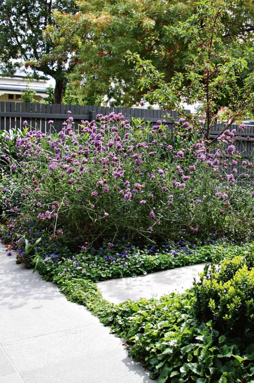 cottage garden: design ideas from a Melbourne makeover   Purple ...