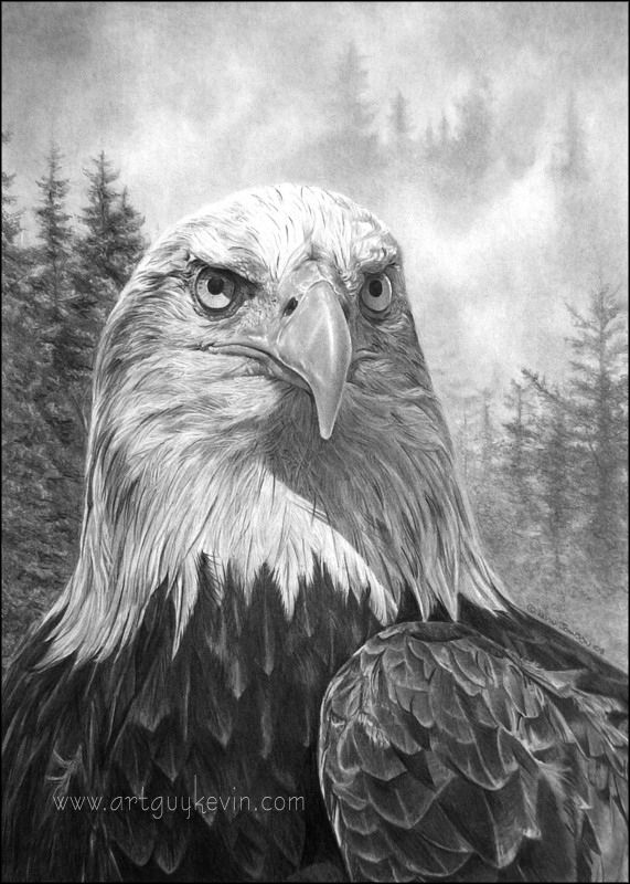 how to draw drawing a realistic eagle