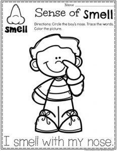 5 Senses Senses Preschool Five Senses Preschool Preschool