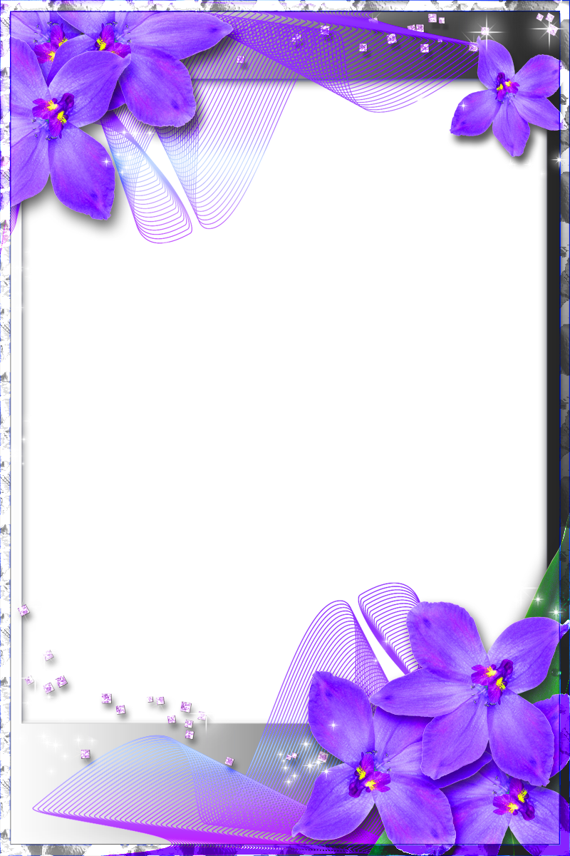 Beautiful transparent frame with purple orchids para maestros beautiful transparent frame with purple orchids izmirmasajfo