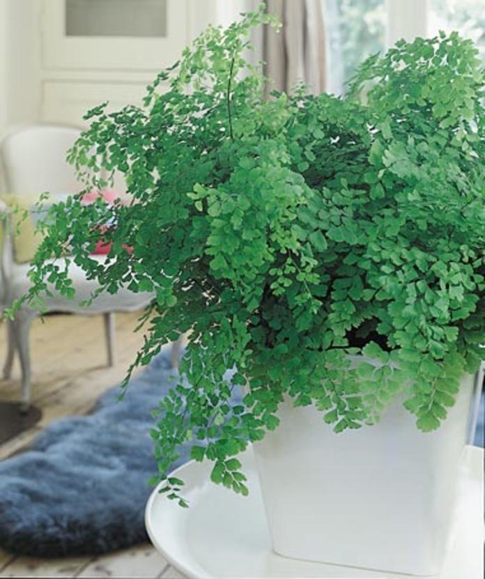 11 zimmerpflanzen f r dunkle ecken pflanzen - Zimmerpflanzen sonniger standort ...