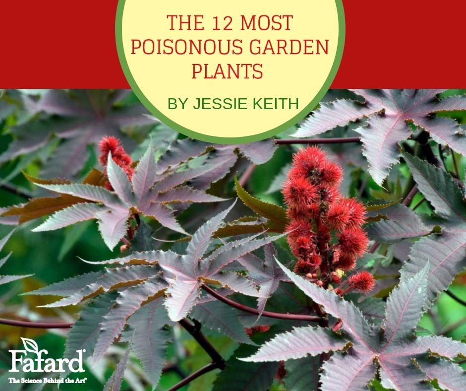 Many Garden Plants Pose A True Threat To Humans Pets And Livestock The Worst Contain Neurotoxins Able To Kill If Ingeste Garden Plants Plants Deadly Plants