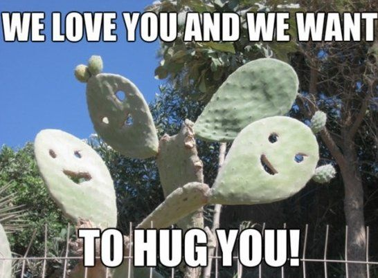 e04a6070e6a5326443f3b03ddc2be959 friendly cactus www meme lol com funny gifs pinterest