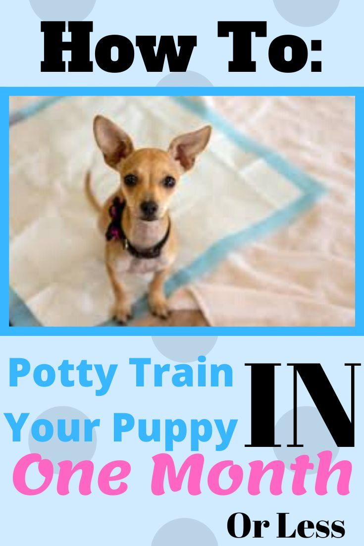 Potty Training Your Puppy In 2020 Puppy Training Training Your
