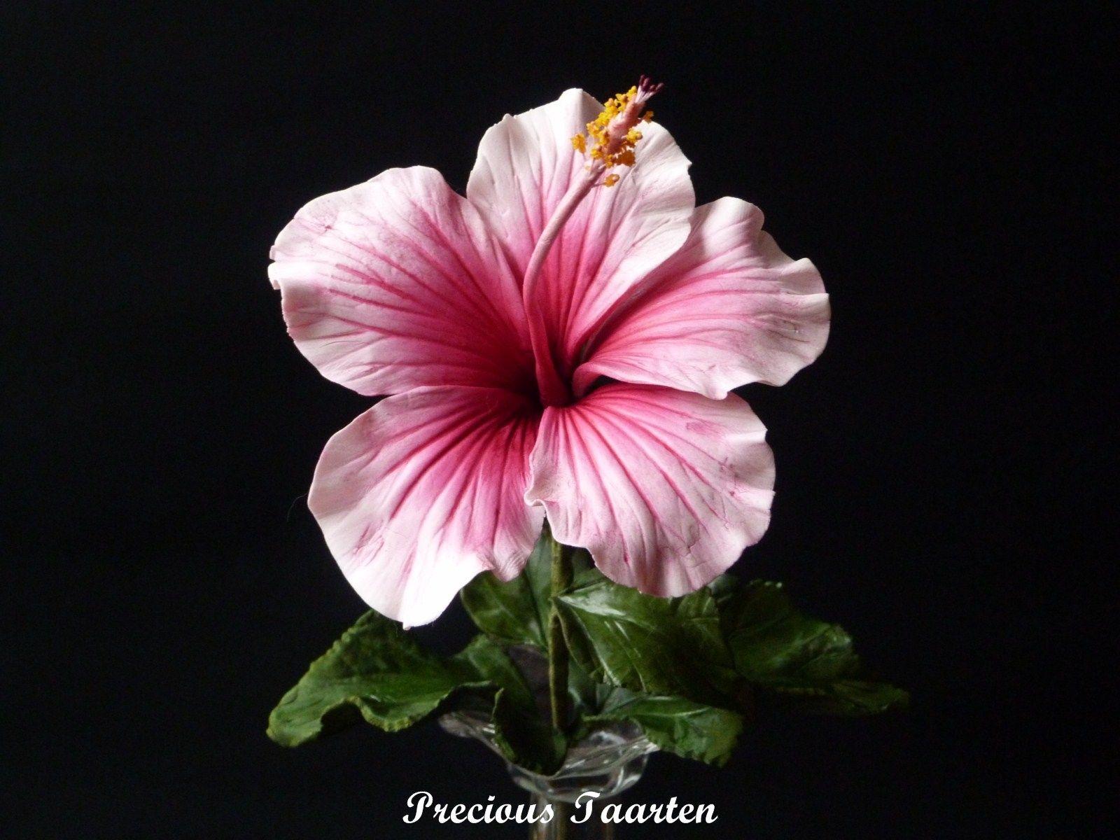 Hibiscus gumpast hibiscus pinterest hibiscus sugar flowers hibiscus fondant flowerscake flowerssugar izmirmasajfo