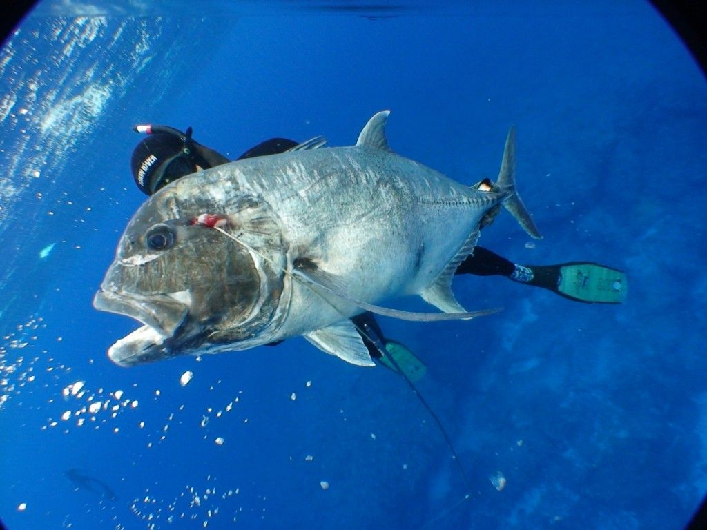 Spear fishing for ulua this place i call home for Fishing spots oahu