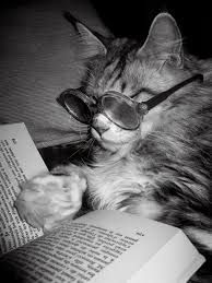 ¡Sin mis gafas de cerca no puedo ver nada! #gato #lectura