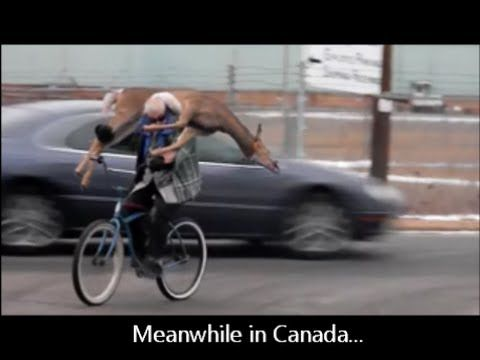 Meanwhile in Canada: Man Carries a Dead Deer ..... this would be my dad.