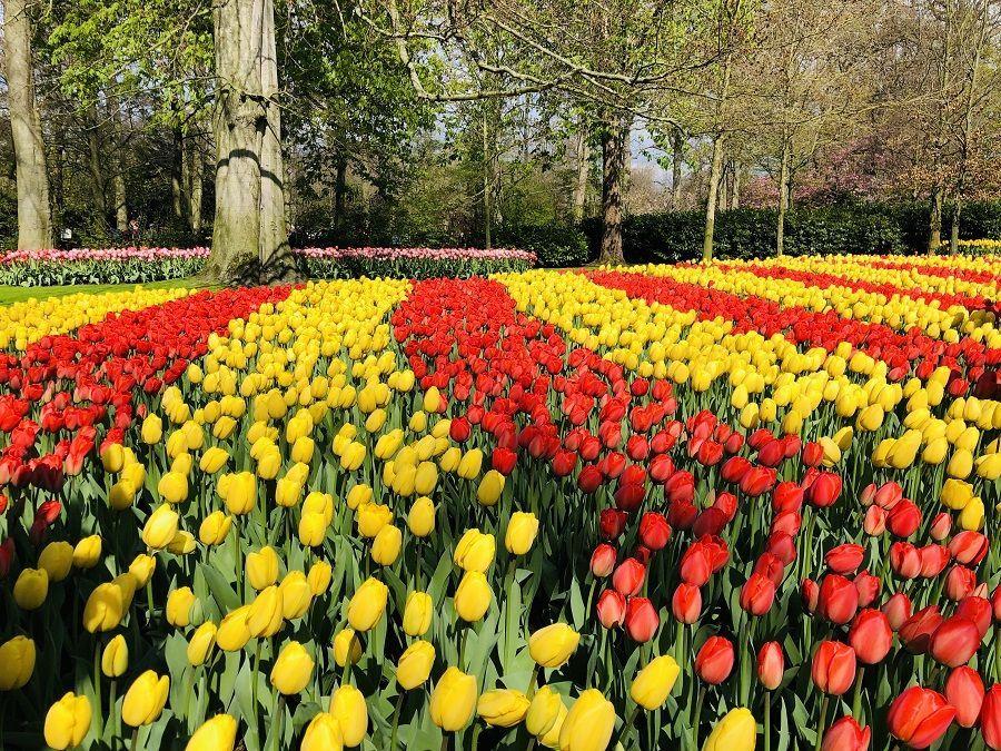 Keukenhof Tulip Festival 2020 Dates Feels Free To Follow Us In