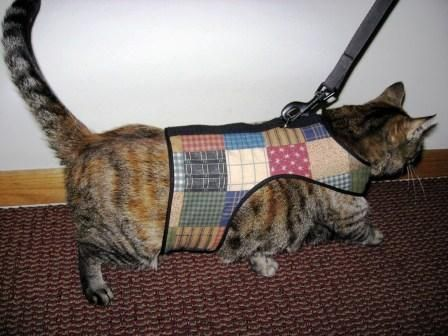 Kitty Holster...  Walk your cat with this soft, comfortable holster specially made for cats~!