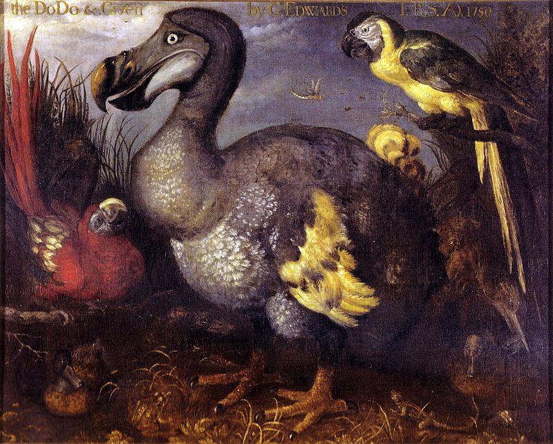 Portrait de dodo, Savery 1628