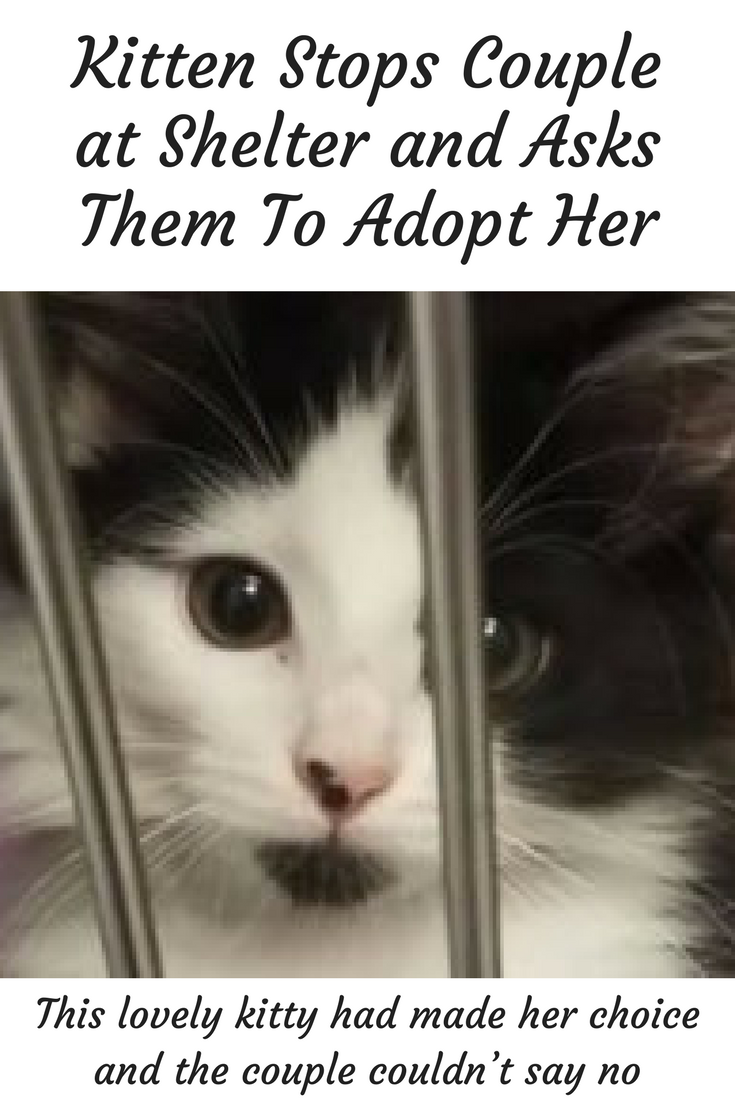 Click Here To See A Lovely Kitty Choose Her Humans At An Animal Shelter Kittens Cute Shelter Kittens Kittens Animal Shelter