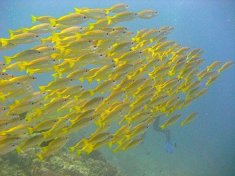 www.mypinkadvisor.com - Pulau Redang Marine Park (2)