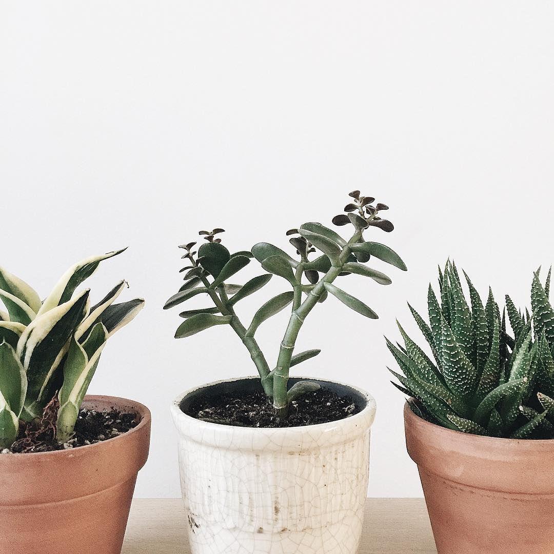 Pinterest kj plant therapy pinterest stephanie