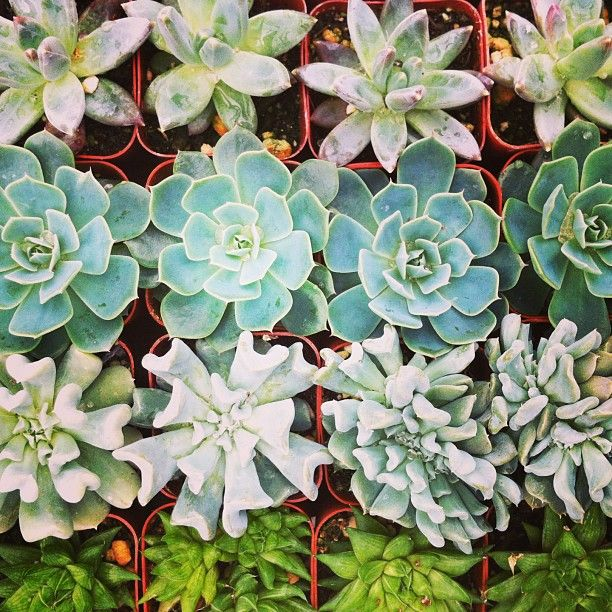 succulents, succulents & more succulents!