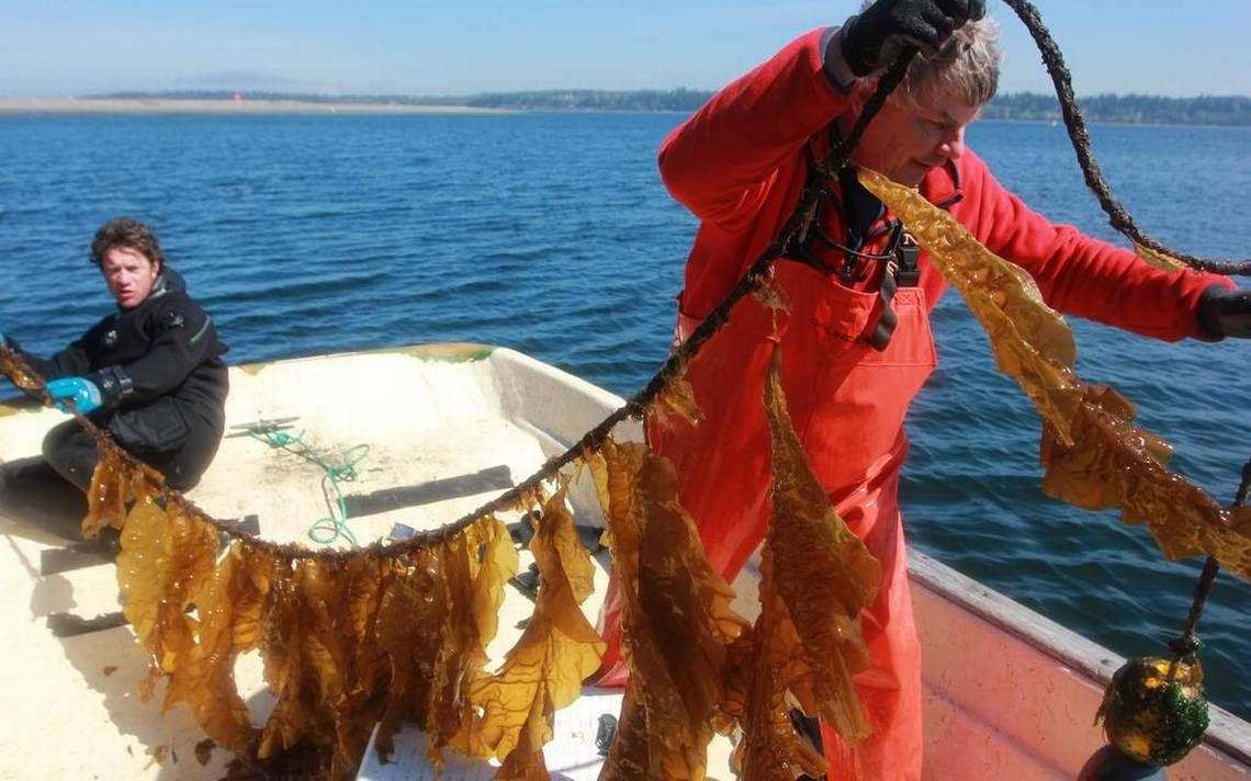 We must overcome the threat of growing acidity in our oceans