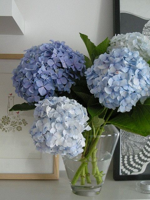 Lovely Hydrangeas Fresh Blooms Pinterest Ina Garten Garten