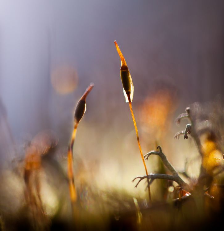 Two beauties in the forest ground, reaching towards light...