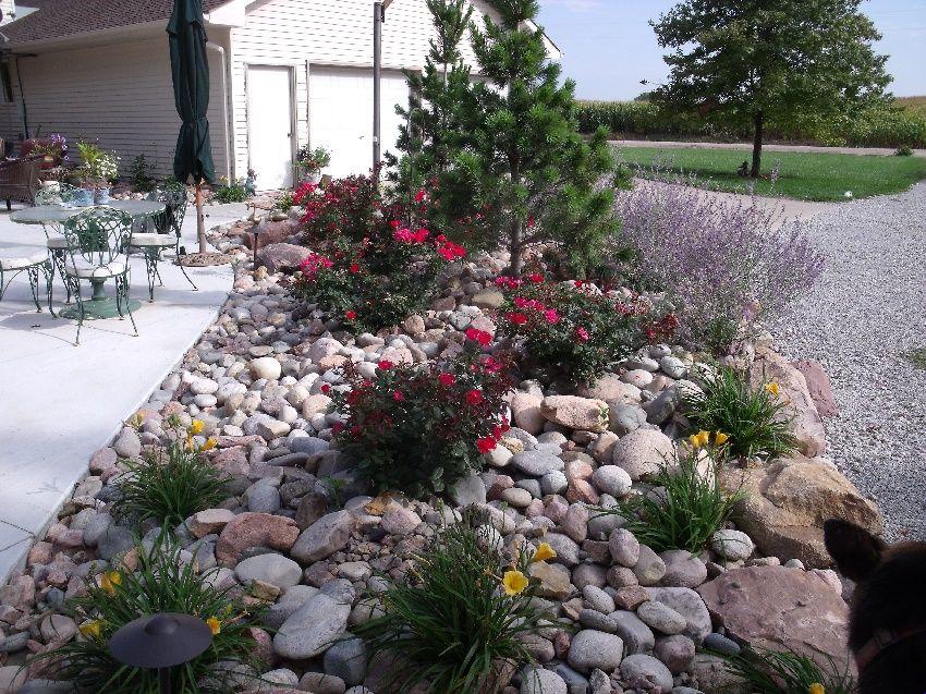 Pflanzen f r steingarten 7 pflegeleichte vorschl ge garten rock garden design landscaping - Steingarten pflanzen fur schattige platze ...