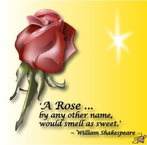 Media Adobe Illustrator Rose Flower Quote Shakespeare Drawn