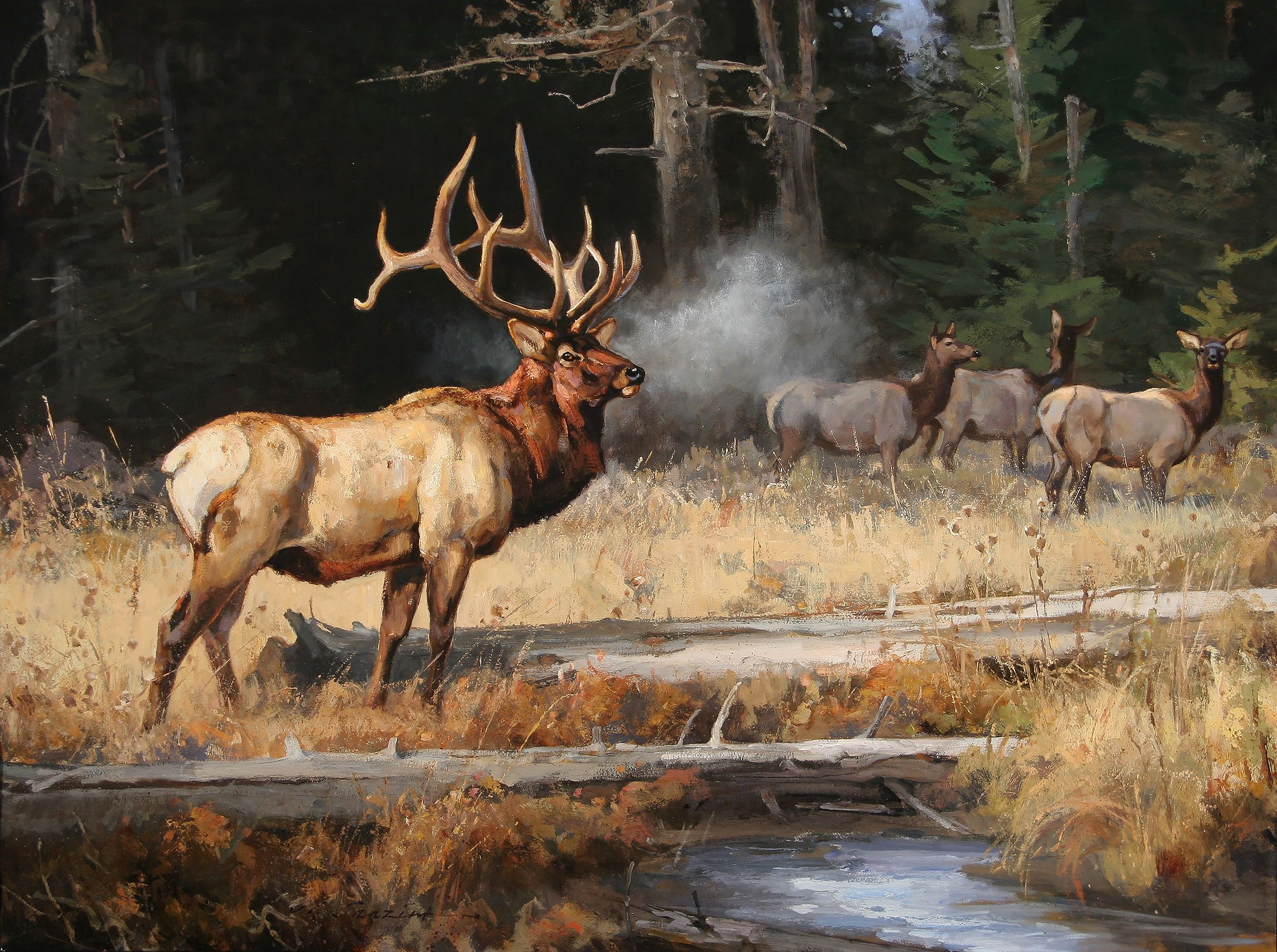 Archive Elk Pictures Hunting Art Wildlife Paintings