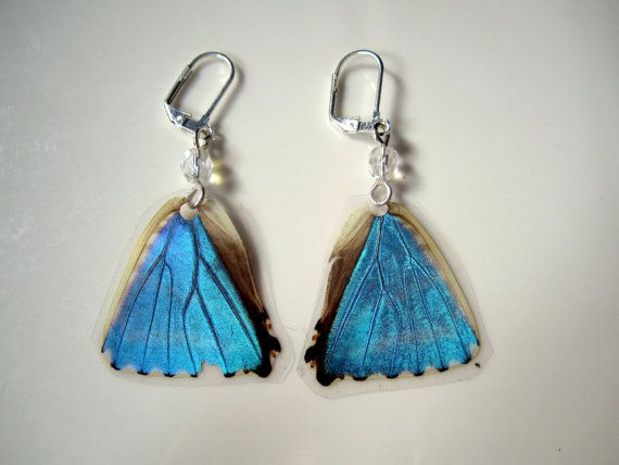 f143456b0 And these to go with it....Blue Morpho Butterfly Earrings Real by ...