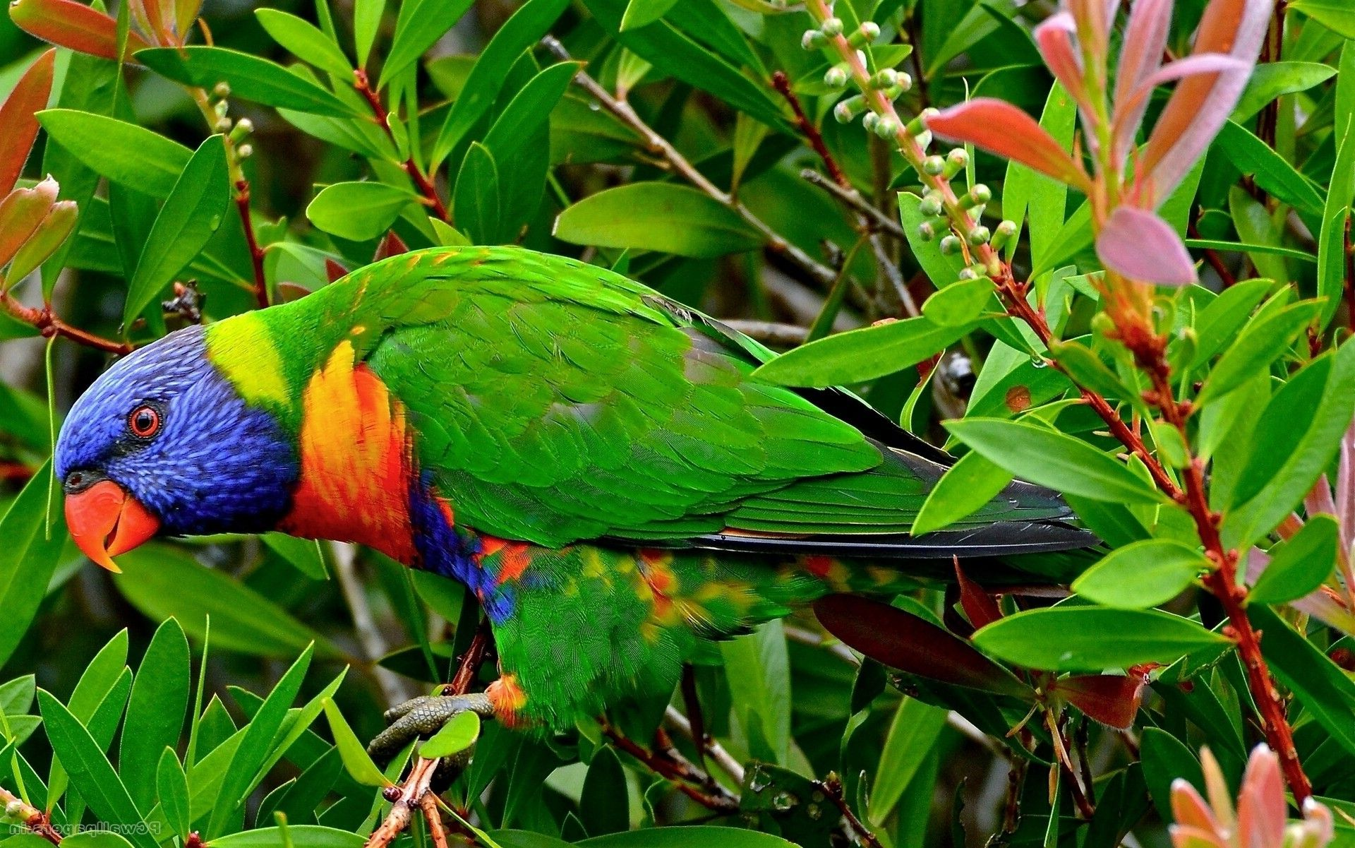 Everyone Like Birds And We Are Giving You The Best Bird Wallpapers Parrot Dog Talking Pictures Images Photos Nice Desktop