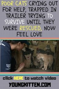 POOR CATS CRYING OUT FOR HELP, TRAPPED IN TRAILER TRYING TO SURVIVE UNTIL THEY WERE RESCUED, NOW FEEL LOVE #animalrescue