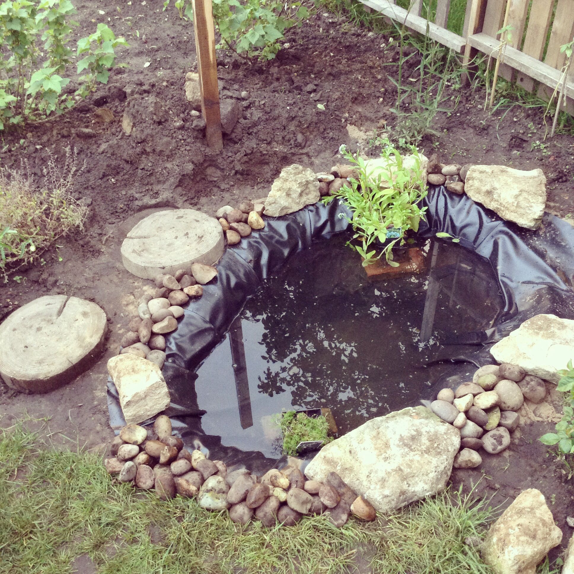 Little wildlife pond up the allotment. www ...