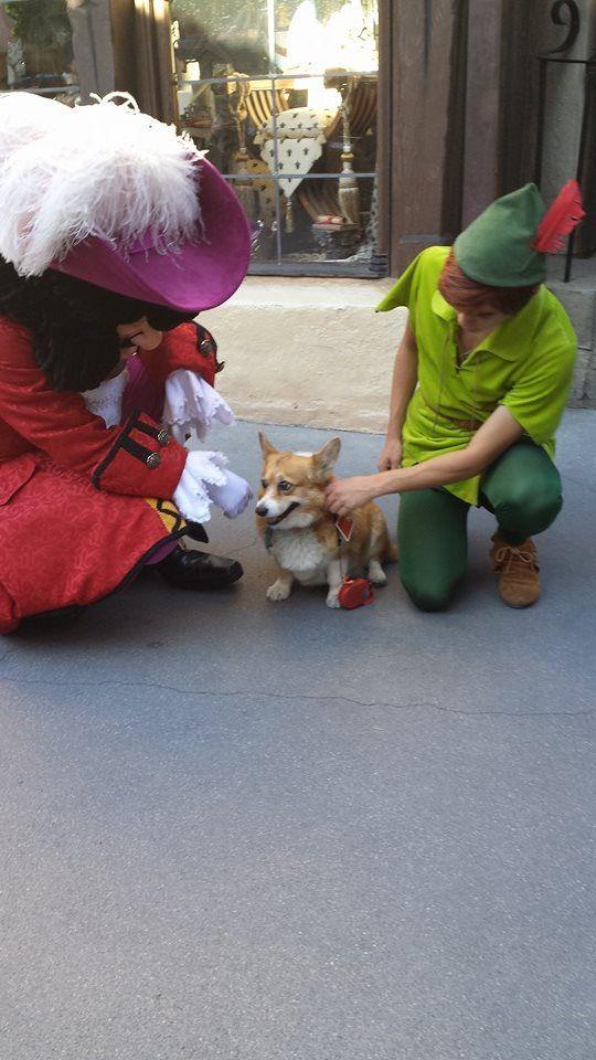 Someone took a corgi to Disney and the results were pure magic