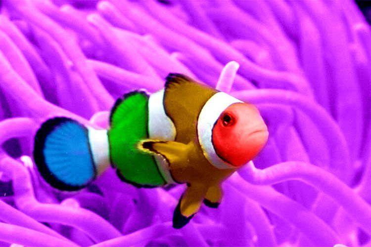 Clown Fish The Life Of Animals Clown Fish Fish Ocean Animals