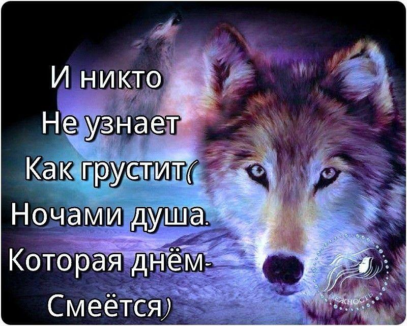 картинки с фразами со волки смыслом о жизни и любви жилые помещения