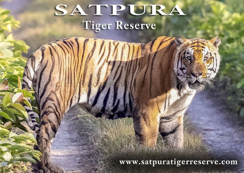 The Satpura hill range is considered as the geographical