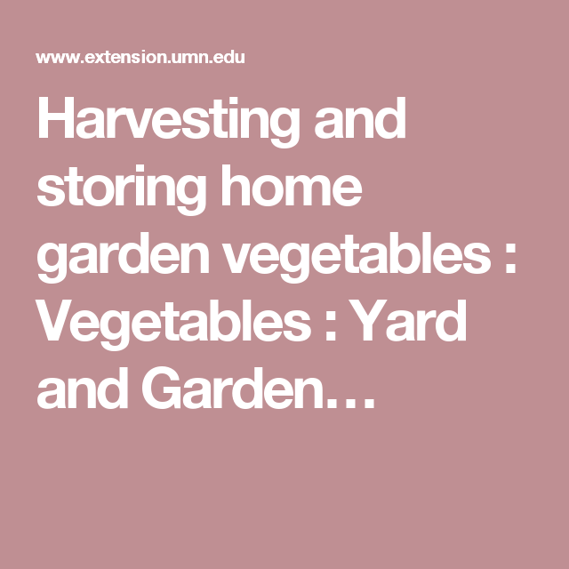 Remarkable Harvesting And Storing Home Garden Vegetables  Vegetables  Yard  With Goodlooking Harvesting And Storing Home Garden Vegetables  Vegetables  Yard And Garden  With Attractive Brigg Garden Centre Opening Hours Also Garden Studio Office In Addition Wooden Garden Obelisks Sale And Coton Manor Garden School As Well As Hanging Garden Images Additionally Hayes Garden Centre From Itpinterestcom With   Goodlooking Harvesting And Storing Home Garden Vegetables  Vegetables  Yard  With Attractive Harvesting And Storing Home Garden Vegetables  Vegetables  Yard And Garden  And Remarkable Brigg Garden Centre Opening Hours Also Garden Studio Office In Addition Wooden Garden Obelisks Sale From Itpinterestcom
