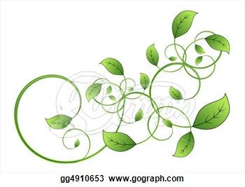 8f2c80fc9 Drawings of Vines and Leaves   drawing flora vine leaf isolated on white  background clipart drawing .