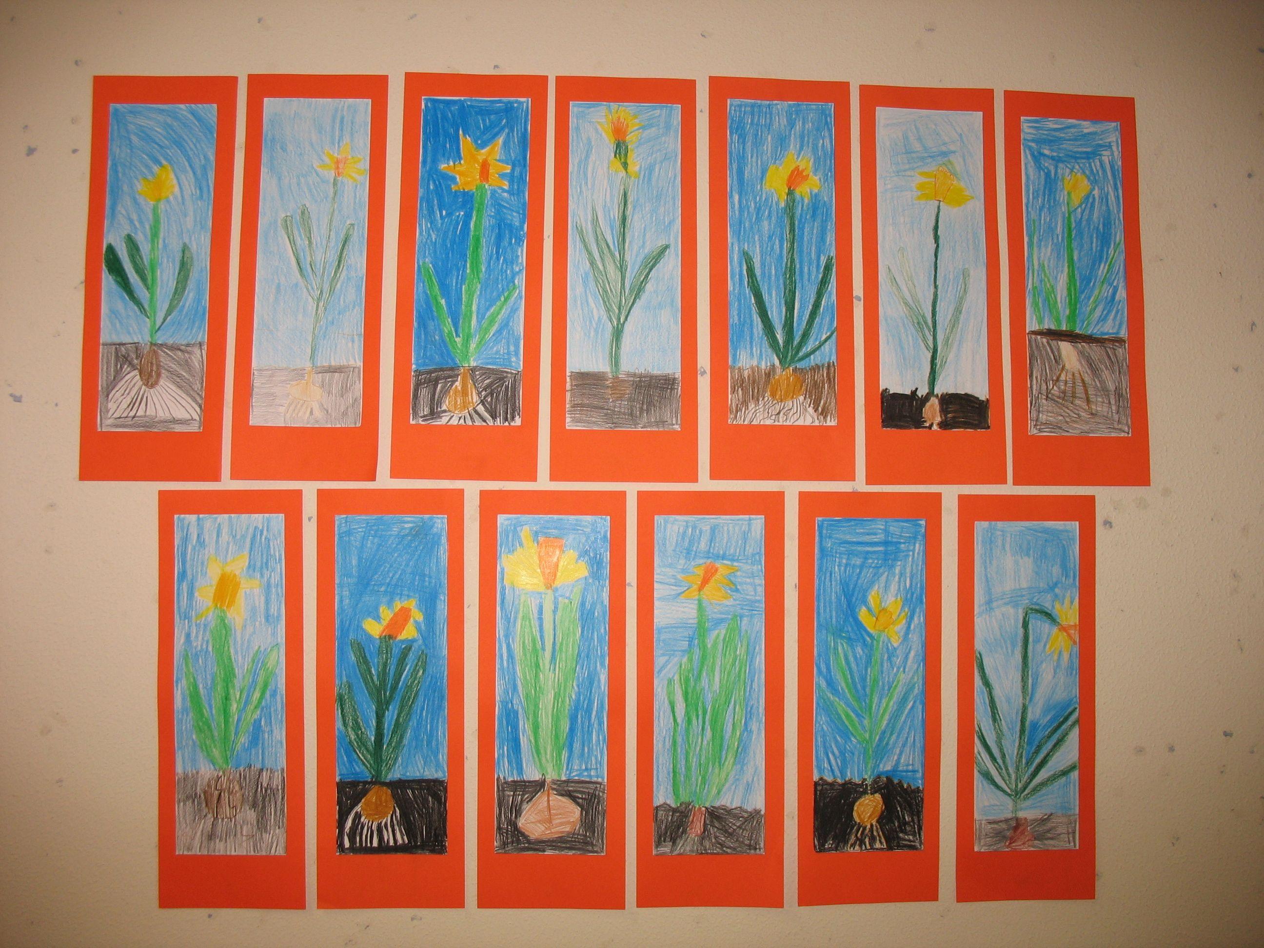 narcissen kleurpotlood op papier groep 3 maart 2014