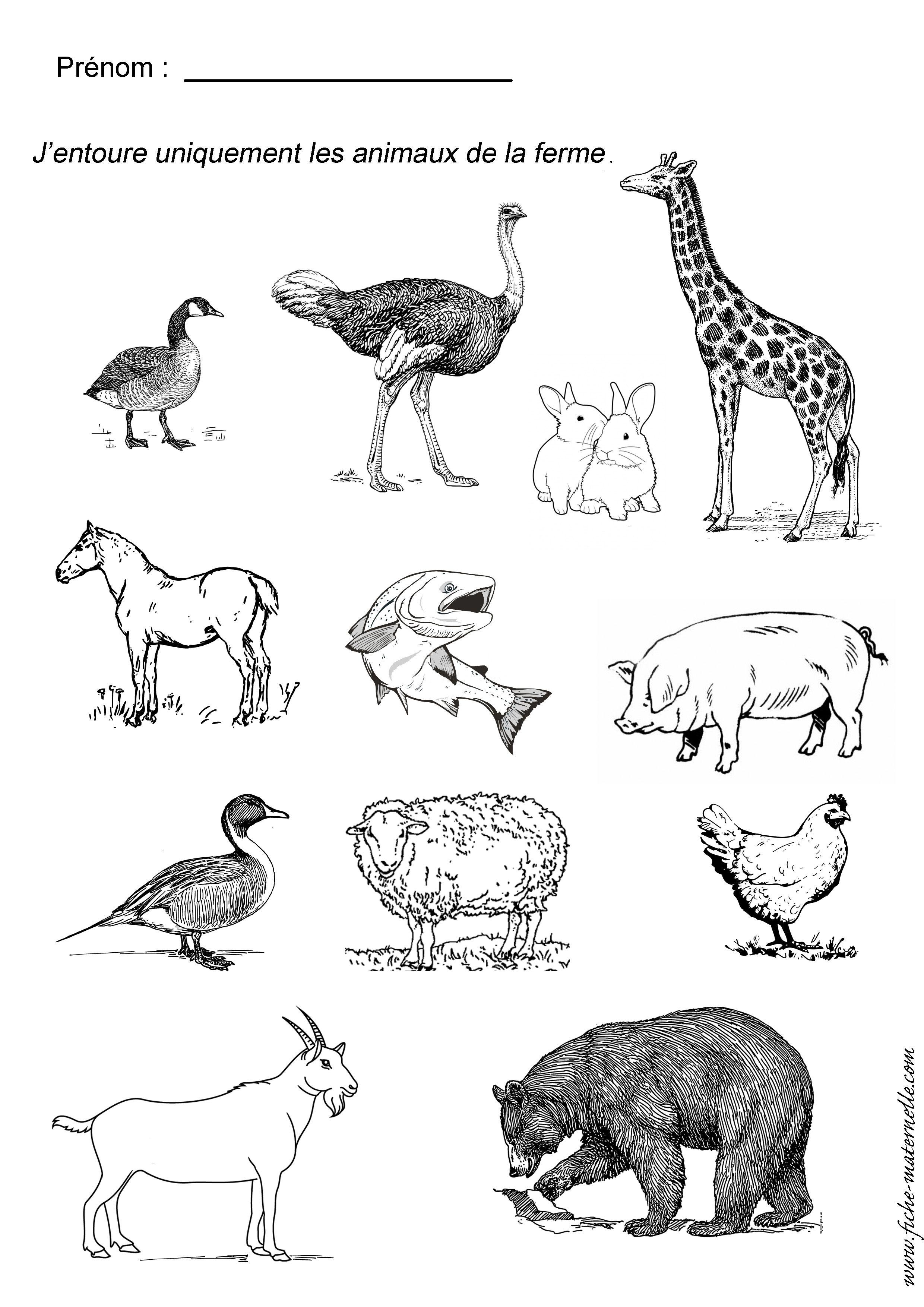Animaux de la ferme ief zoologie pinterest animaux - Animaux de la jungle maternelle ...