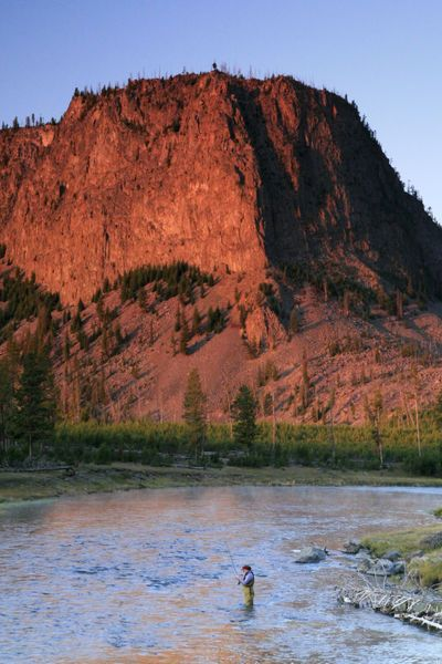 Fly fishing on the madison river yellowstone national for Yellowstone national park fishing