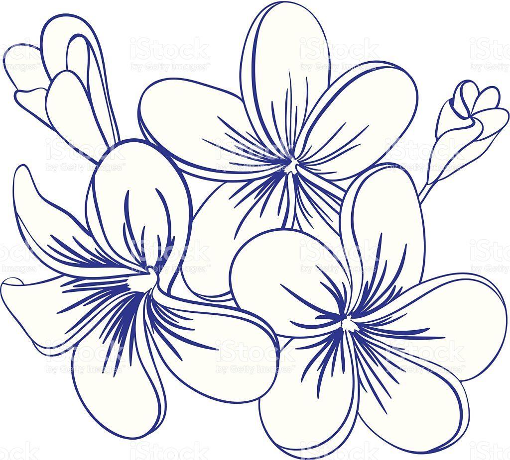 Beautiful Hand Drawn Plumeria Flowers Pretty Cute Sketch Flower Line Drawings Flower Drawing Tropical Flower Tattoos