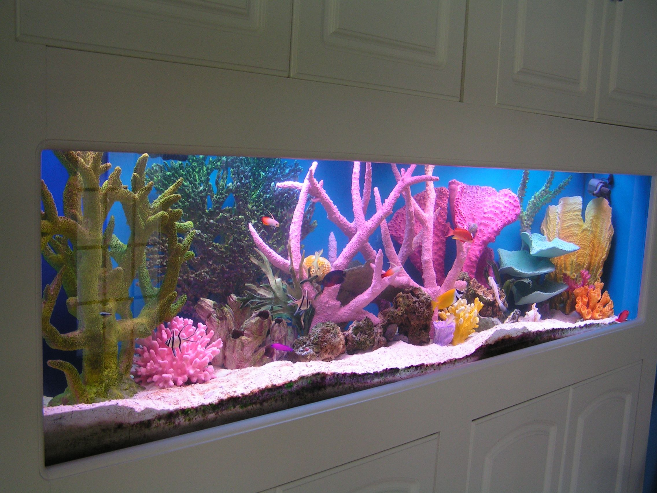 Small aquarium fish tanks - Marine Fish Tanks Anyone With Saltwater Fish Tank The Hull Truth Boating And