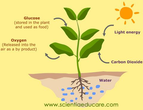 Photosynthesis Education News Photosynthesis Nutrition In Plants Plants