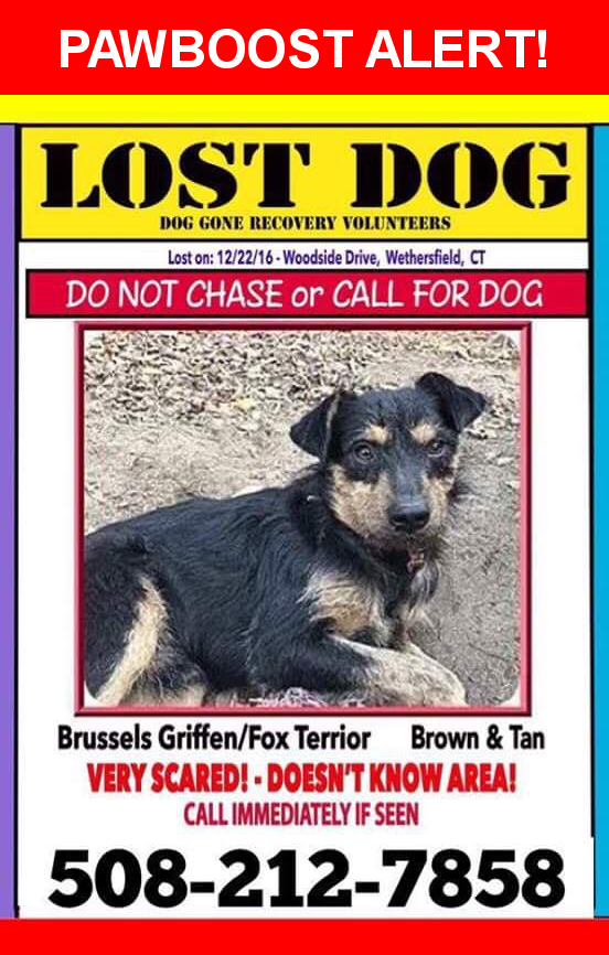 Please spread the word! Scruffy was last seen in Cromwell, CT 06416.  Description: neutered male, black and tan, small, rescued from streets of TN and newly transported to area