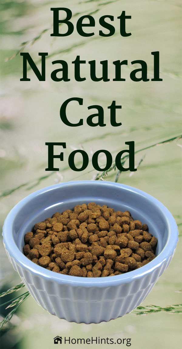 New Study Reveals The Healthiest Vet Recommended Premium Cat Food Brands The Formulas Include High Qu Gesundes Katzenfutter Katzen Futter Gutes Katzenfutter