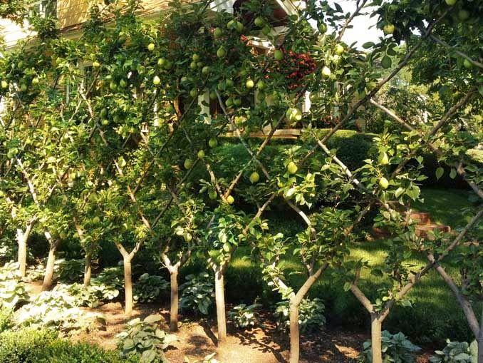 Frutales en espaldera para jardines peque os jardin for Arboles jardin pequeno