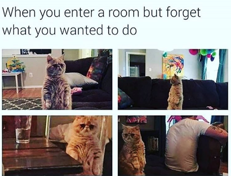 Cat Memes Clean Memes Cat Memes Clean Cat Memes Funny Animal Videos