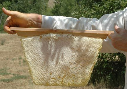 Delicieux Harvested Honey Comb From A Golden Mean Top Bar Hive. 7 Pounds Of Honey Comb