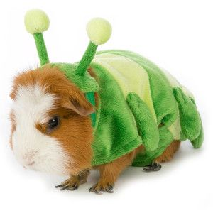 All Living Things Small Pet Caterpillar Spring Petsmart Small Pet Costumes Small Pets Pet Costumes