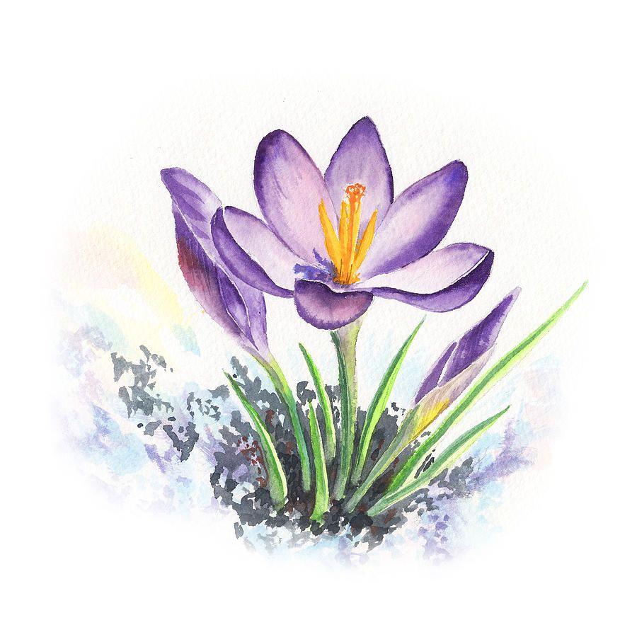 Crocus Flower By Irina Sztukowski by Irina Sztukowski ...